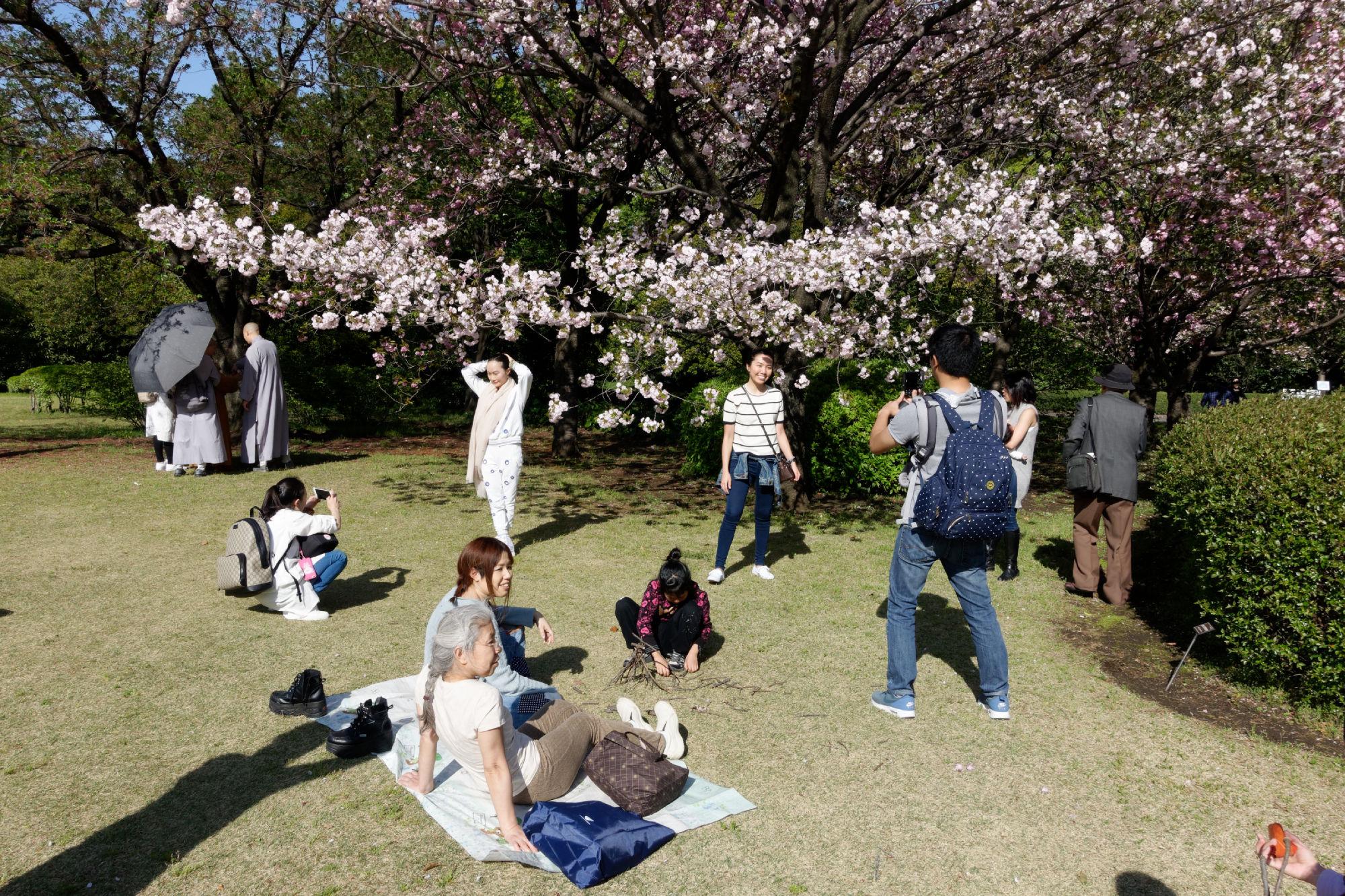 2017-04-19 15-14-57 Cherry Blossom