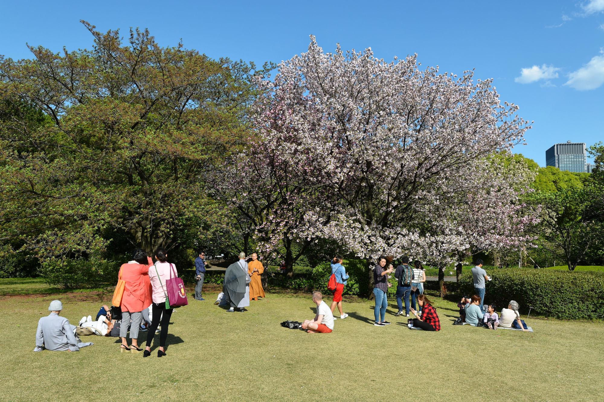 2017-04-19 15-24-27 Cherry Blossom